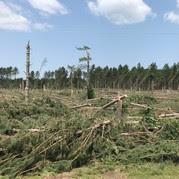 Broken trees and shrubs after storm damage