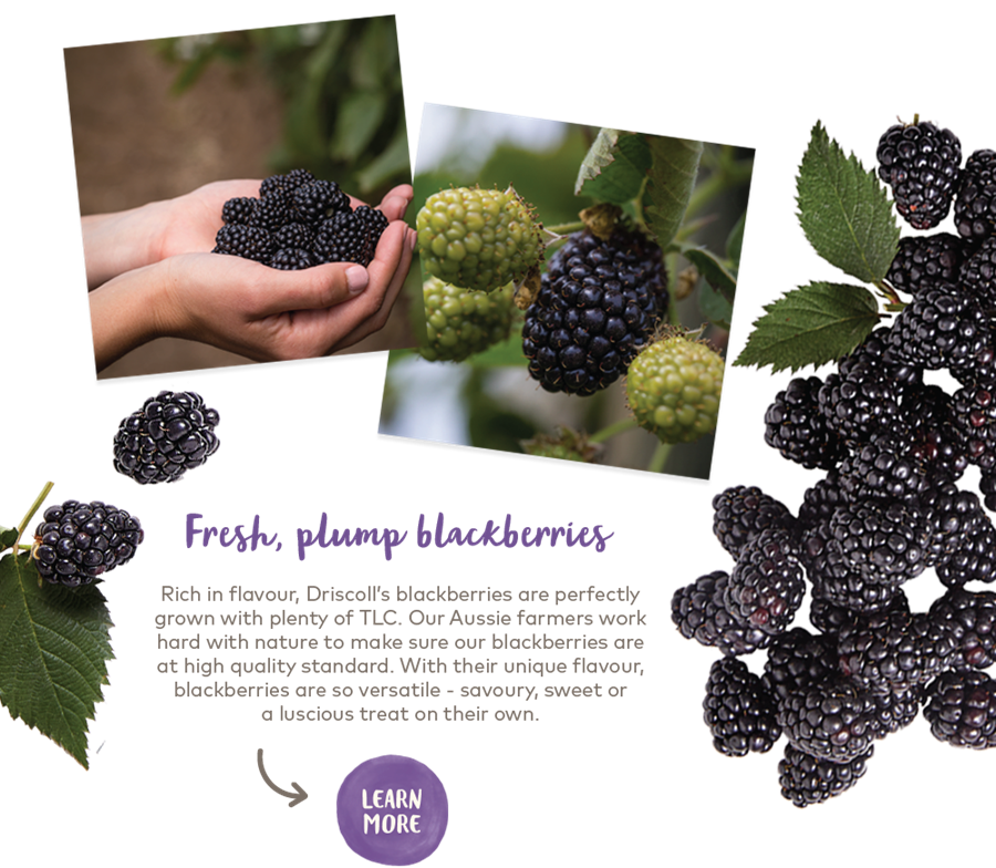 Learn more about Driscoll's blackberries