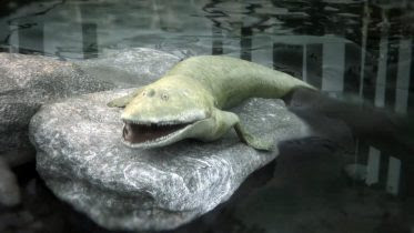 Ancient Elpistostege Fish