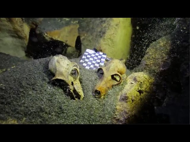 7 Mysterious & Amazing Underwater Discoveries of 2015  Sddefault
