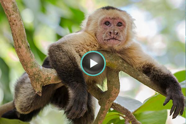Costa Rica & Panama adventure cruises