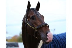 Higher Power takes a bath following his Oct. 25 breeze at Keeneland