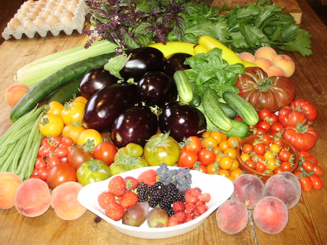 Some of my late July polytunnel produce including 11 varieties of tomatoes