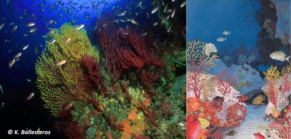 coralligene