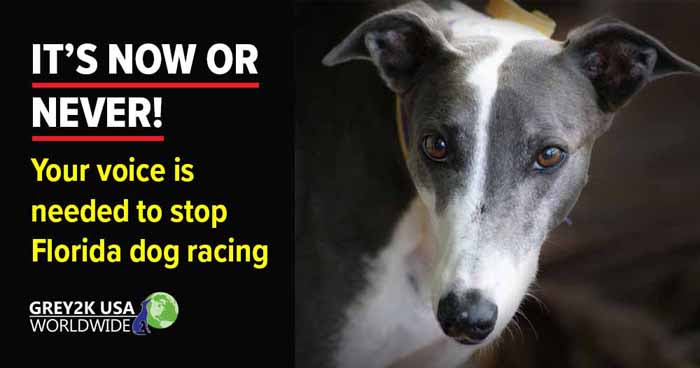 IT'S NOW OR NEVER! Your voice is needed to stop Florida dog racing