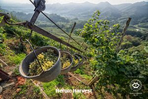 Heroic harvest in the hills of Conegliano Valdobbiadene Prosecco Superiore Docg_photo credits Arcangelo Piai
