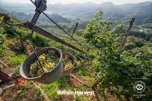 Heroic harvest in the hills of Conegliano Valdobbiadene Prosecco Superiore Docg_photo credits Arcangelo Piai