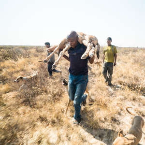Bushmen have been criminalized for feeding their families under Botswana's hunting ban.