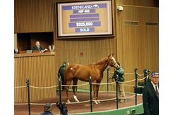 Regal Glory brings $925,000 at the Keeneland January Sale