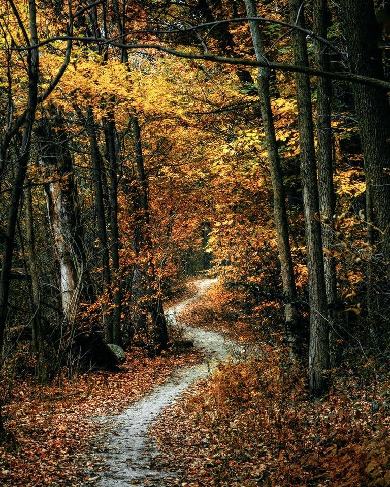 path_