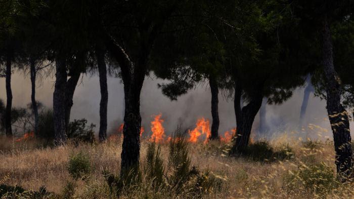 VIDEOS. Espagne : au moins 1 800 personnes évacuées à la suite d'un incendie dans le parc naturel de Doñana
