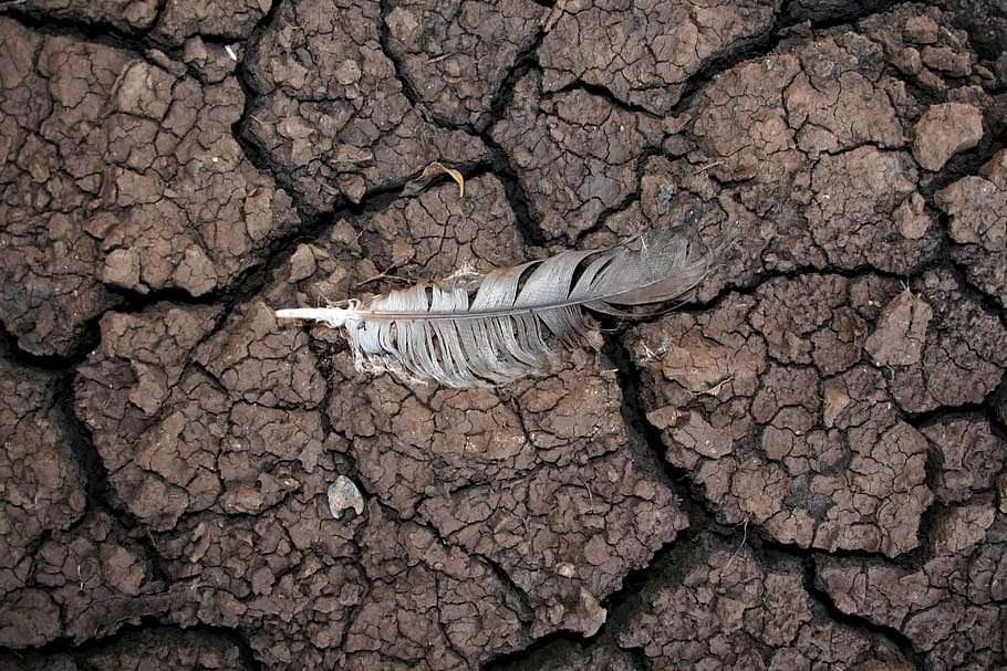 drought mud feather dry