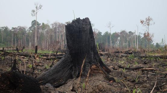 Selva devastada por incendios en Indonesia