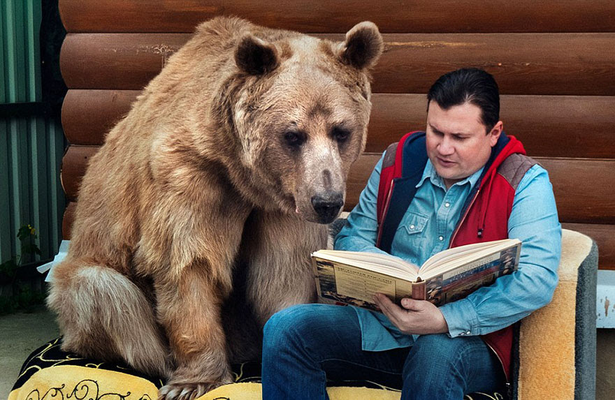 http://www.boredpanda.com/adopted-bear-russian-family-stepan/?image_id=adopted-bear-russian-family-stepan-a2.jpg