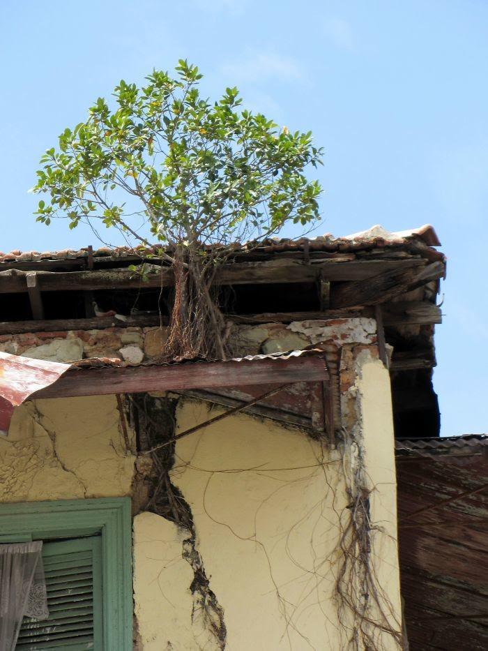 На крыше дерево, живучесть, жизнь, мир, планета, растительность, фото