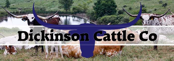 Dickinson Cattle Co, LLC