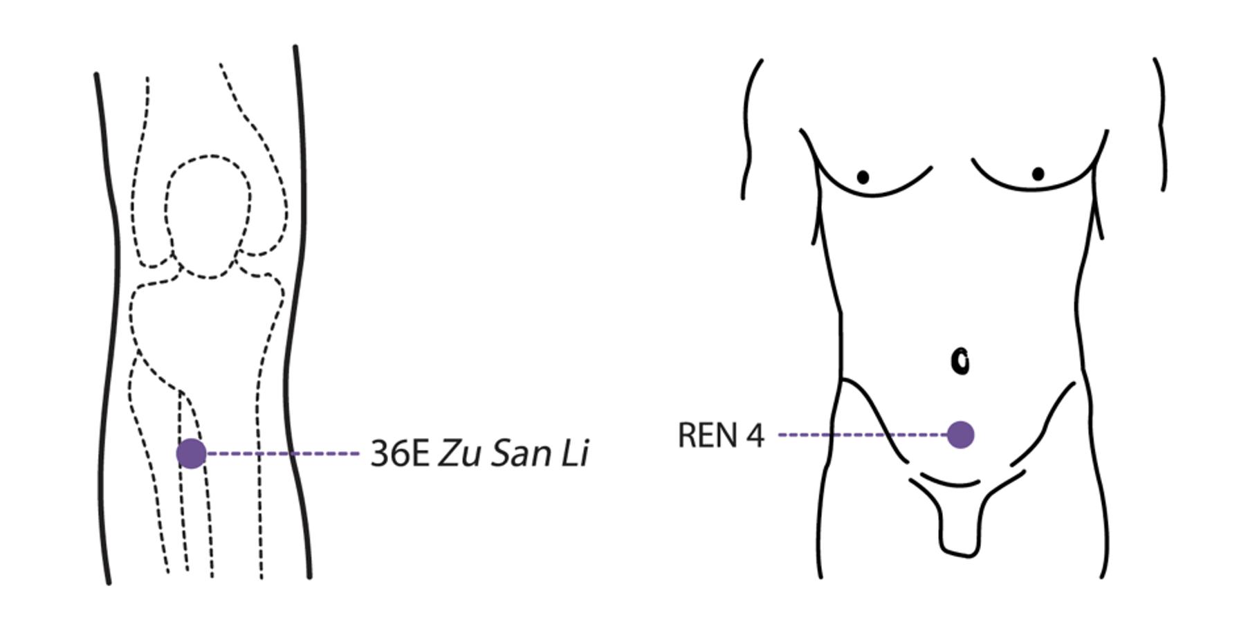 Points d'acupuncture E 36 et Ren 4