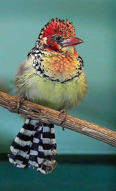birds, 5