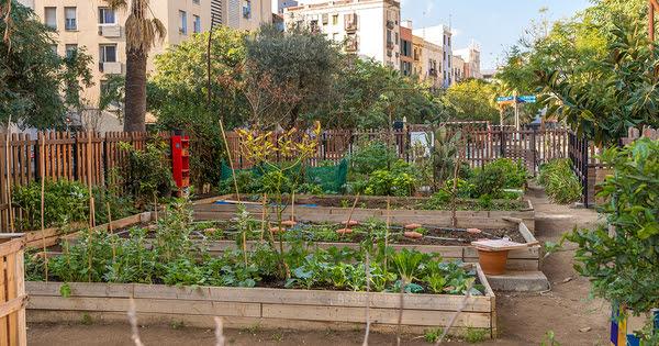 Plan de relance: des appels d'offres pour soutenir les jardins partagés et l'agriculture urbaine