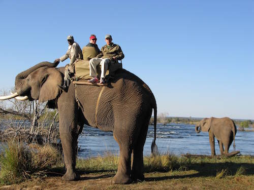 Esther and one of her grandsons with their tour guide on a safari in Africa, luxury family vacations