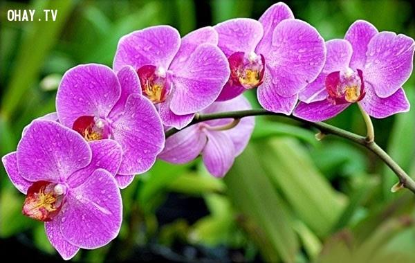 Hoa Lan: Cuộc sống vương giả.,ngôn ngữ các loài hoa,hoa đẹp,hoa ngữ