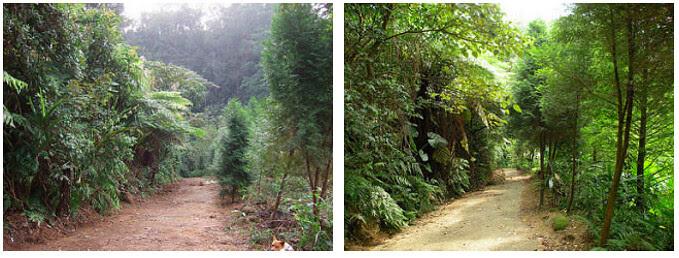 自然谷面貌的變遷