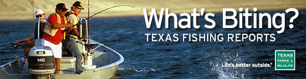 whats biting - texas fishing reports