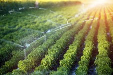Shifts in cropland and trade patterns could feed the world in 2050