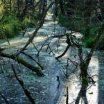 swamp-971210_960_720