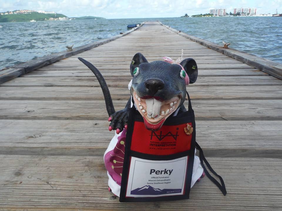 Perky in Puerto Rico