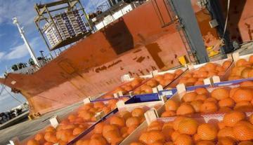 Exportaciones peruanas de mandarinas frescas crecen 14% en volumen al 18 de julio