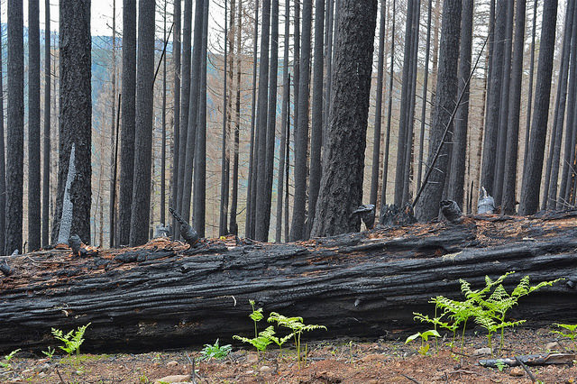 Airstrip Timber Sale canceled after 36 Pit Fire Mt Hood by Christine Toth