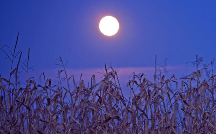 Corn Moon, Harvest Moon, Full Moon in Pisces