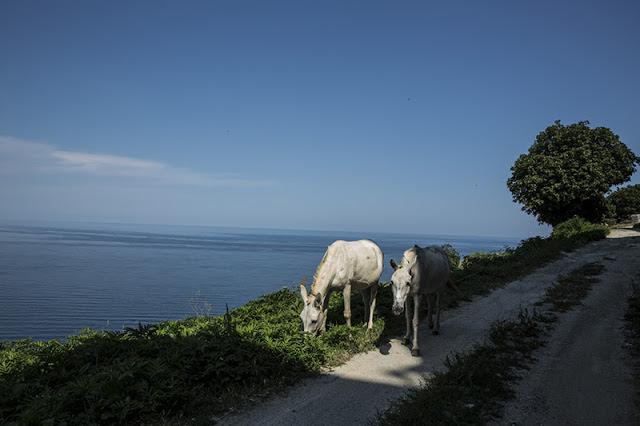 9131 - Το Άγιο Όρος με τον φακό του Ιάπωνα φωτογράφου 中西裕人(なかにし・ひろひと) - Φωτογραφία 24