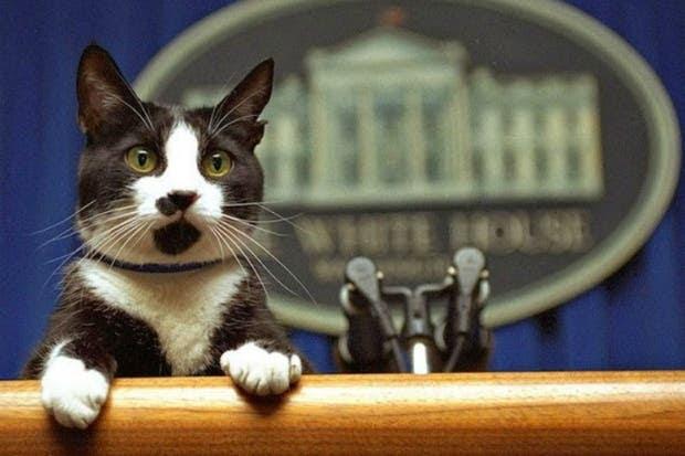 Socks paseó por todos los ambientes de la Casa de Gobierno