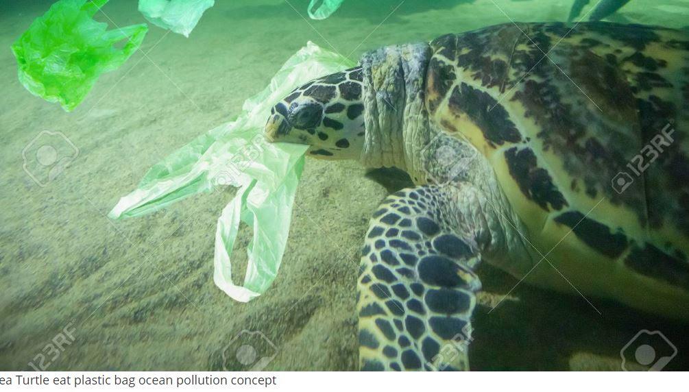 χελώνα πλαστικό