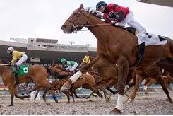 Horses race at Woodbine