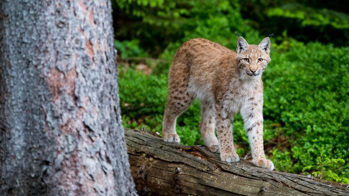 """Recul """"massif"""" du nombre d'animaux sur Terre : """"L'extinction en cours est entièrement de la faute de l'homme"""", juge un zoologiste"""