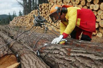 Exportaciones del sector forestal tienen oportunidades para crecer