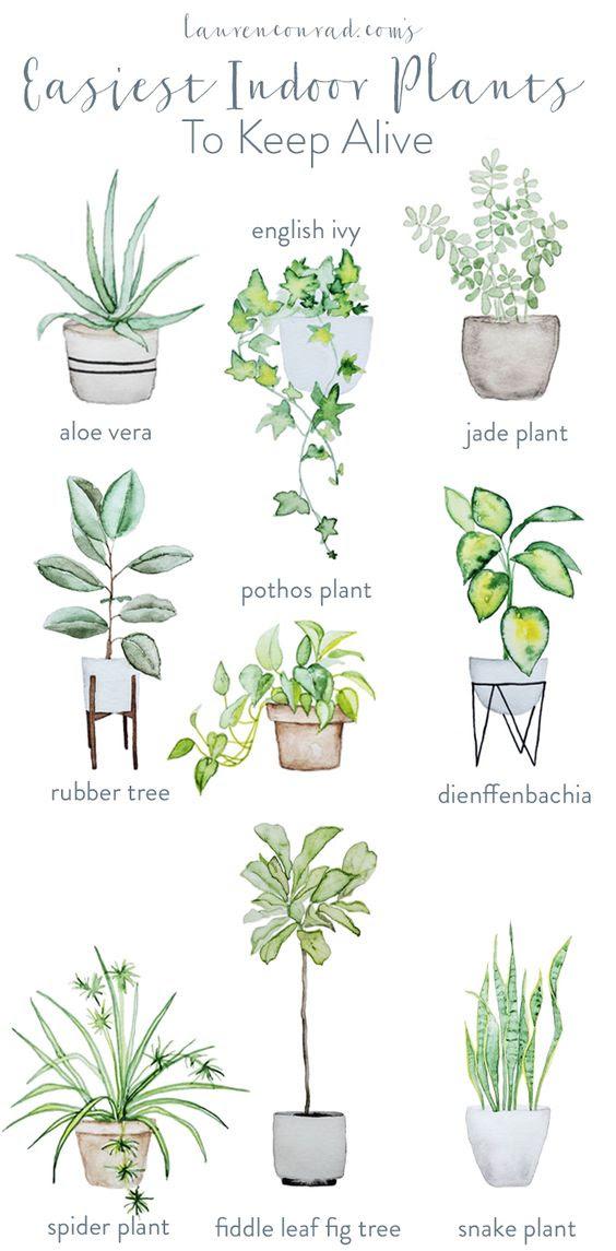 Interior Design per piante da appartamento | Down2Earth Interior Design