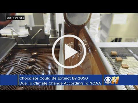Scientists Say Climate Change May Make Chocolate Extinct By 2050