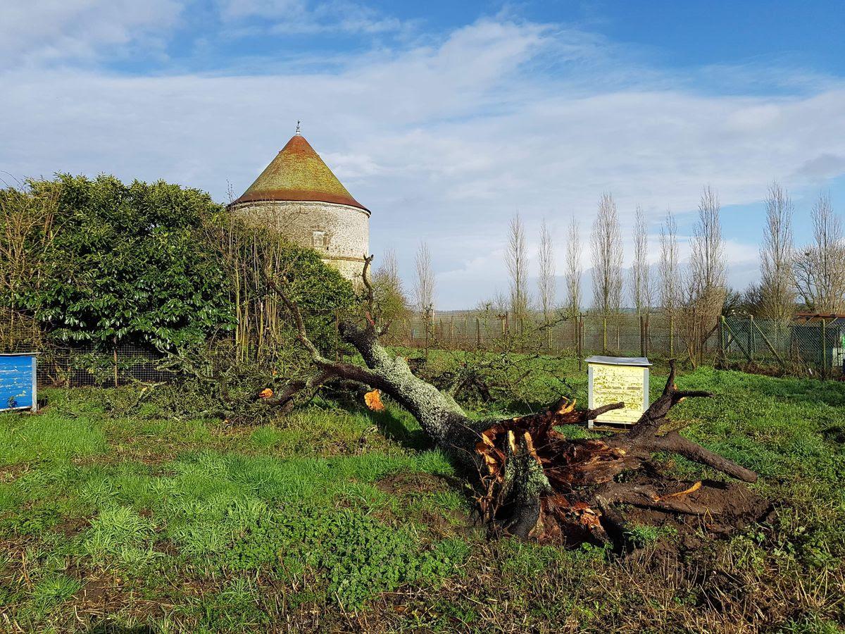 Un arbre est tombé pendant la nuit