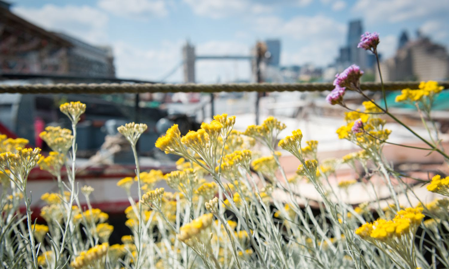 2-for-1 tickets to Open Garden Squares Weekend