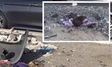 Homeless Pit Bull Keeps Vigil by Her Dead Best Friend for Two Weeks (Video)