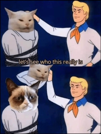 cat meme.png