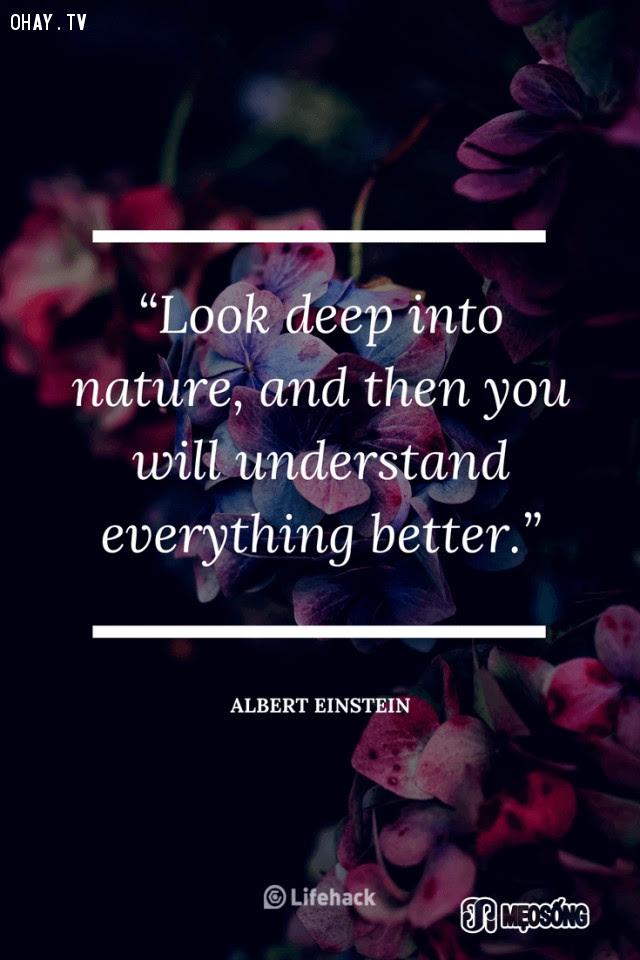 1. Hãy nhìn sâu vào thế giới tự nhiên, bạn sẽ thấu hiểu mọi thứ rõ ràng hơn,albert einstein,câu nói hay,triết lý sống,câu nói ý nghĩa