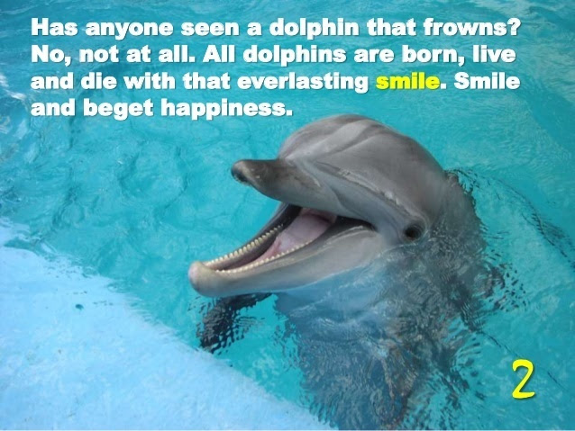 16-life-lessons-from-dolphin-3-638