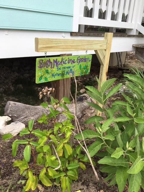 bush medicine garden