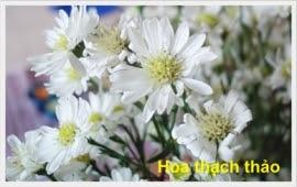 Hoa thach thao 1