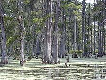 220px-cypresses